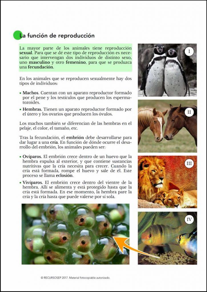 ccnn 2  u00ba ciclo  las funciones vitales en los seres vivos