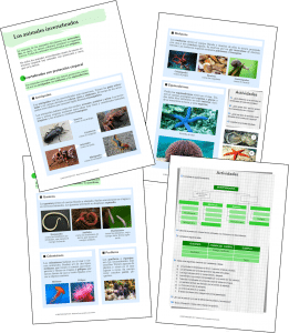 Los animales invertebrados [CCNN Tercer Ciclo]