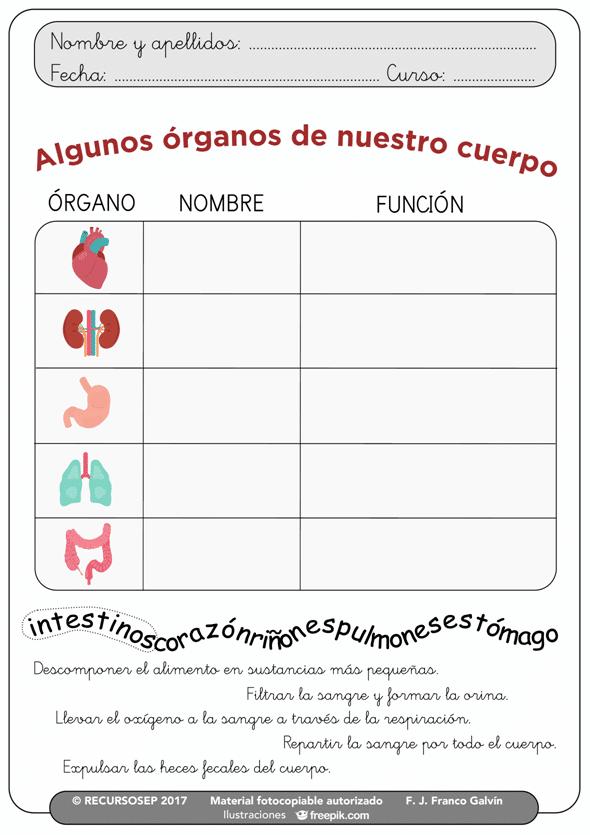 Algunos órganos de nuestro cuerpo (CCNN 1.º y 2.º Primaria)