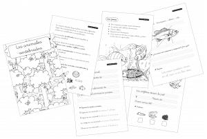 Mi cuadernillo de los animales vertebrados – Primer Ciclo Primaria