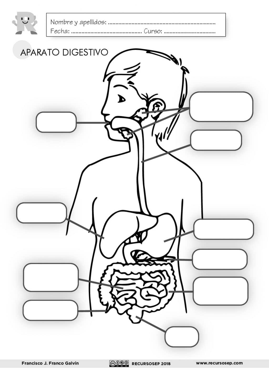 Excepcional Sistema Muscular Para Colorear Fotos - Enmarcado Para ...