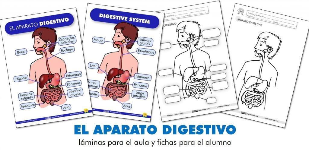 EL APARATO DIGESTIVO: láminas para el aula y fichas para el alumno ...