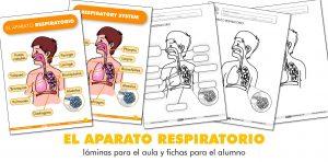 EL APARATO RESPIRATORIO: láminas para el aula y fichas para el alumno (ES/EN)