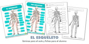 EL ESQUELETO: láminas para el aula y fichas para el alumno (ES/EN)