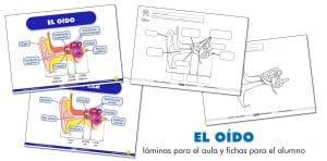 EL OÍDO: láminas para el aula y fichas para el alumno (ES/EN)